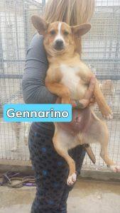 Gennarino